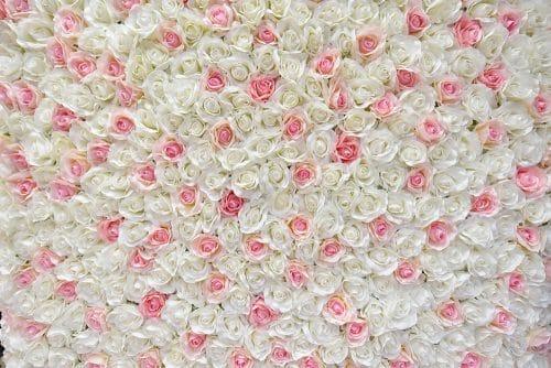 Blush cvjetni zid